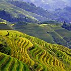 Rice terraces in Longsheng, China by Arianey