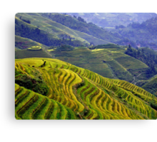 Rice terraces in Longsheng, China Canvas Print
