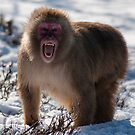 Snow Monkey by Fraser Ross