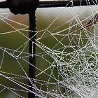 Icy Morning Web by LadyEloise