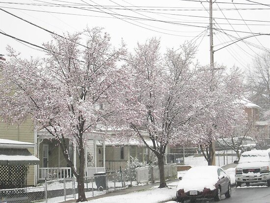Feb. 19 2012 Snowstorm 12 by dge357