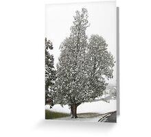 Feb. 19 2012 Snowstorm 27 Greeting Card