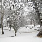 Feb. 19 2012 Snowstorm 28 by dge357