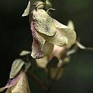 Dried Beauty by Joy Watson