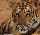 Tiger series 004 by Karl David Hill