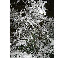 Feb. 19 2012 Snowstorm 36 Photographic Print