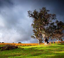 Rural Light - Adelaide Hills, SA by Ben Goode