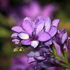 Violet Beauty  by SuzieCheree