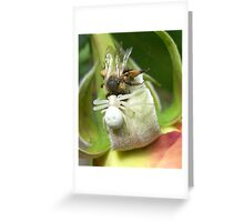 Nature Photo: Crab Spider Capturing a Bee Greeting Card