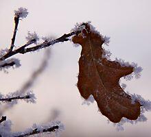 Gingerbread leaf by LadyFi