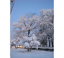 Feb. 19 2012 Snowstorm 75 Photographic Print