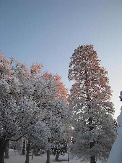 Feb. 19 2012 Snowstorm 98 by dge357