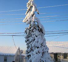 Feb. 19 2012 Snowstorm 109 by dge357