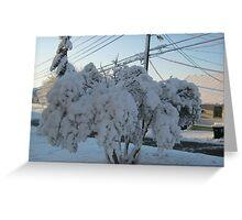 Feb. 19 2012 Snowstorm 113 Greeting Card