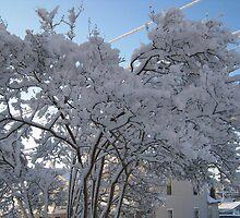 Feb. 19 2012 Snowstorm 116 by dge357