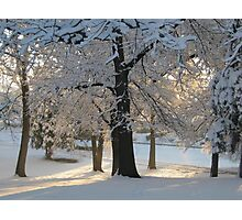 Feb. 19 2012 Snowstorm 117 Photographic Print