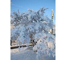 Feb. 19 2012 Snowstorm 120 Photographic Print
