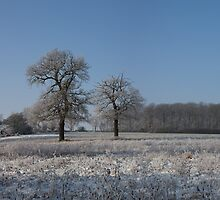 Winter Wonderland. by Nick Atkin