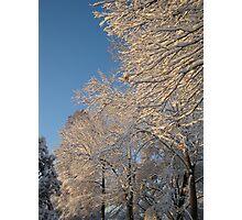 Feb. 19 2012 Snowstorm 138 Photographic Print
