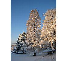 Feb. 19 2012 Snowstorm 140 Photographic Print