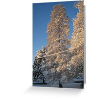 Feb. 19 2012 Snowstorm 141 Greeting Card