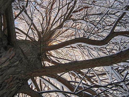 Feb. 19 2012 Snowstorm 148 by dge357