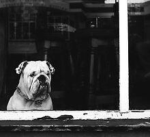 Winston by TonySkerl Photography.com