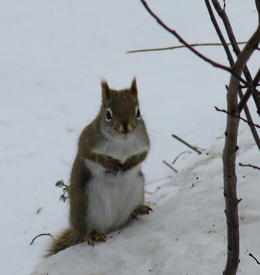 So...about those nuts you mentioned.. by Tracy Faught