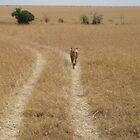 A Leisurely Stroll by bhavini