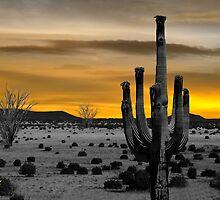 Golden Desert Scene by George Lenz