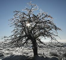 Icy tree by Jane Corey
