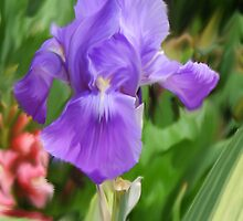 Good Morning Iris by Diane E. Berry