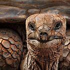 Great-great-great-grand-tortoise by Irina Chuckowree
