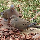 Doves by Bine