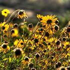SpringFlowers_6039 by sasakistudio