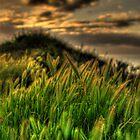 SpringGrass_5385A by sasakistudio