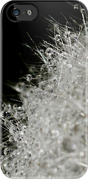 Dandelion Dew by Megan Noble