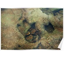Dinosaur Tracks in the River Poster