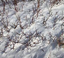 Cold Closeup by Carole-Anne