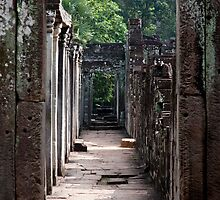 Jungle Walk by phil decocco