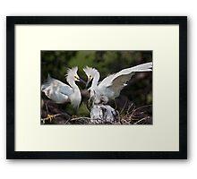 Snowy Egret Family Framed Print