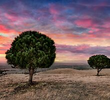 Barossa Valley Sunset by Shannon Rogers