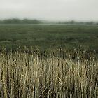 Misty Holes bay by swandundee
