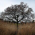 One tree by swandundee