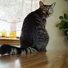 Get Off The Table? Why? by Carolyn  Fletcher