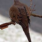 Cold Dove by Bine