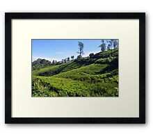 Tea Garden Framed Print