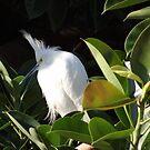 White Beauty - Belleza Blanca by Bernhard Matejka