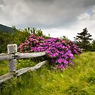 Carvers Gap Roan Mountain State Park Highlands TN NC by Dave Allen