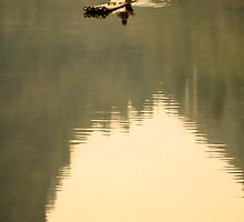 Lone Fisherman  by Chris Perry